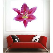 Affiche poster lys rose  67612540