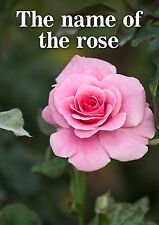 The Name of the Rose! - 6, 8, 10, 12  player games - mystery only