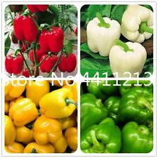 210 seeds Vegetable Sweet Pepper Topepo Rosso Seeds & Bulbs Other Seeds & Bulbs