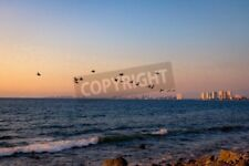 "Bildmotiv ""Group of pelicans flying on the beach at sunset - Puerto Vallarta..."""