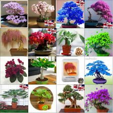 SEEDS Collection Bonsai Tree Colourful Unique Rare Indoor Plants Potted Japanese