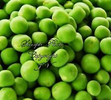 Little Marvel Shelling Pea Seeds Non GMO Sweetest Round Pods Fresh or Frozen