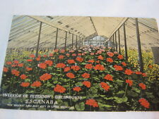 Interior of Peterson's Greenhouse Escanaba Mich Old Postcard    T*