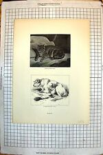 Old Print Quite At Home Cat 1813 Short-Horn Bull 1812 Tournament 1812 483J718