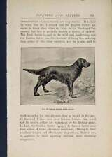 Old Antique Print Pointer Pointers Dog Dogs Irish Setter 406441