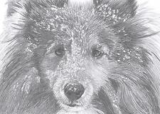 ROUGH COLLIE / SHELTIE dog LE art drawing prints  2 sizes A4/A3 & Card avail