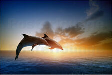 Póster, lienzo o cuadro en metacrilato Dolphins in the sunset