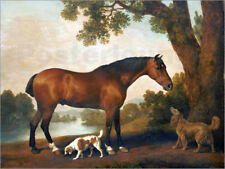 Poster, stampa su tela o vetro acrilico Horse and two dogs - George Stubbs