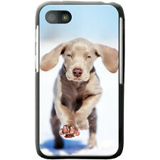 Weimaraner Vorstehhund Grey Ghost Dog Hard Case For Blackberry Q5