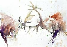 JEN BUCKLEY signed LIMITED EDITON PRINT of original Red Deer rutting watercolour