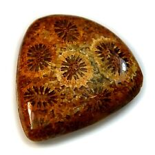 Natural Agatized Fossil Coral Cabochon Collection