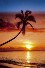 Strände Beaches Sunsets - Palm Tree On The Beach - Poster Druck - Größe 61x91,5