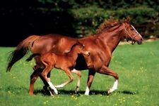 New Chestnut Mare and Foal The Beauty of Horses Poster