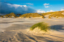 Poster, stampa su tela o vetro acrilico Dunes on the island of Amrum, North Sea