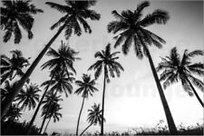 Poster / Toile / Tableau verre acrylique Silhouettes of palm trees
