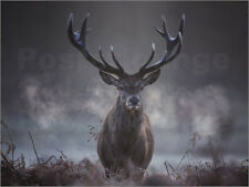Póster, lienzo o cuadro en metacrilato A majestic red deer stag... - A. Saberi