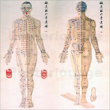Póster, lienzo o cuadro en metacrilato Acupuncture Map of the male body