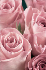Póster, lienzo o cuadro en metacrilato Bunch of roses in pale pink
