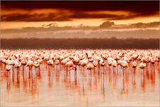 Póster, lienzo o cuadro en metacrilato Flamingos at sunset