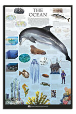 Dorling Kindersley The Ocean Educational Wall Chart Poster New