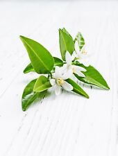 Neroli Oil  10ml for Soaps, Candles and Perfume