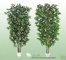 Two Potted 7and039 Real Wood Artificial Tree Ficus + Birch Dandeacutecor