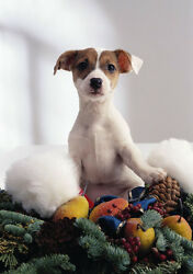 Art print POSTER Jack Russell Terrier Puppy Sitting on Wreath