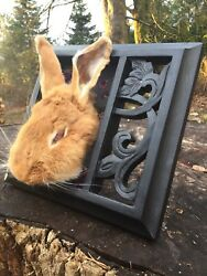 Red-Bunny Rabbit - taxidermy mount-animal OOAK domestic