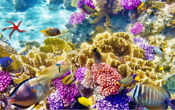 3d Seabed Coral 8 Floor Wallpaper Murals Wall Print Decal Aj Wallpaper Us Carly