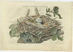 Antique Bird Print Of The Nest Of A Black-crowned Night Heron By Sepp Andamp Noze