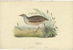 Antique Bird Print Of The Land-rail By Gould 1832