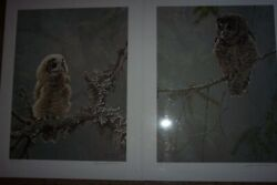 Robert Bateman Continuing Generations - Spotted Owls S/n Limited Edition Set