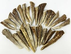 24 Pack - Deer Antler Gnarly Brow Tine Tips Points Pendants Grade A