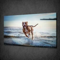ENGLISH TERRIER DOG ON BEACH CANVAS PRINT PICTURE WALL ART FREE FAST POSTAGE