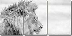 Wall26 - Side Profile Of A Lion In Black And White In The Kruger National Park