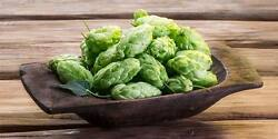 Variety Pack Hop Seeds Grow Your Own Hops Home Brew 25 Seeds Each 4 Varietals