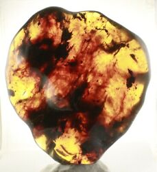 Rare Collectable Fan Shape Full Polished Mexican Amber 669g