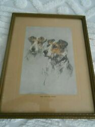 Absolutely Stunning Vintage Wire Haired Fox Terrier Framed Print -pls see notes!
