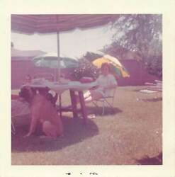 MYSTERY MAN amp; WOMAN RELAX in BACKYARD SHADE w BOXER MIX DOG VTG FOUND PHOTO 483
