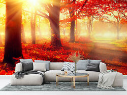 Autumn Trees And Leaves In Sunlight Wallpaper - Large Wall Mural Self-adhesive