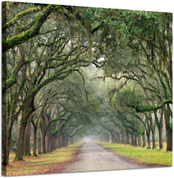 Hardy Gallery Landscape Artwork Pictures Canvas Prints Spanish Moss Covered Gre