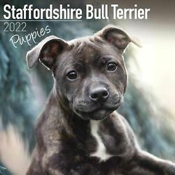 2022 Staffordshire Bull Terrier Puppies Square Wall Calendar