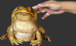 Frog Statue Life Size - Toad Statue