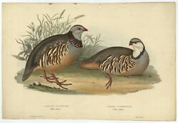 Antique Bird Print Of The Barbary Partridge And Greek Partridge By Gould 1832