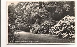 The Rhododendron Dell Kew Gaedens Londres London