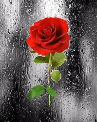 Red Gray Black Wall Art Photo Print Rose Home Decor Romantic Bedroom Floral Pic
