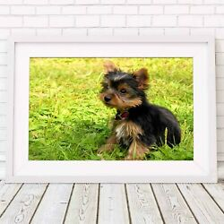 YORKSHIRE TERRIER PUPPY DOG - Poster Picture Print Sizes A5 to A0 *FREE DELIVERY