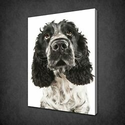 ENGLISH COCKER SPANIEL CANVAS PRINT PICTURE WALL ART FREE FAST DELIVERY