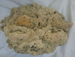 Real Reef Rock Coral Decoration Large With Clam Fossils, 14x10x7