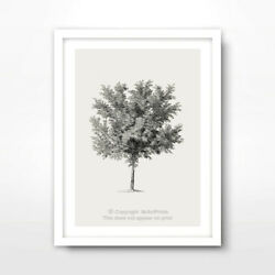 TREE ILLUSTRATION ART PRINT Poster Room Decor Wall Trees Picture Artwork Vintage